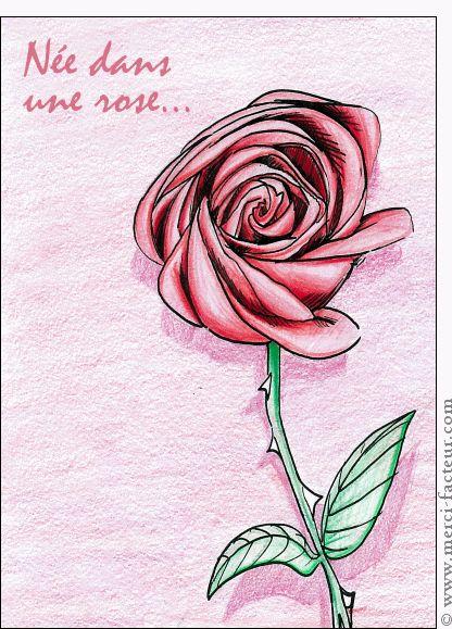 Carte Née dans une rose, dessin d'une rose pour envoyer par La Poste, sur Merci-Facteur !