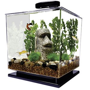 Best 25 10 gallon fish tank ideas on pinterest 1 gallon for 10 gallon fish tank lid