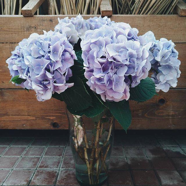 Buchet cu hortensii albastre. Blue Hydrangea bouquet
