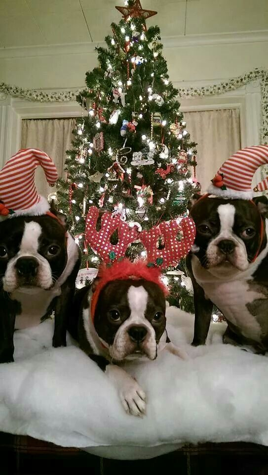 1000 Images About Christmas Furry Friends On Pinterest