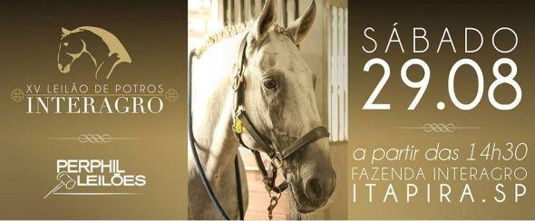 XV Leilão de Potros Interagro   Notícia   Mercado Horse