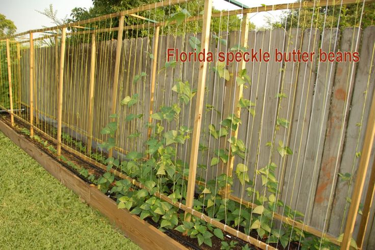 17 best images about trellises on pinterest tomato cages for Vegetable garden trellis designs