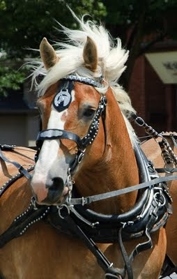 Belgian Horse - Dufferin Street, London. Posted by Wendy Tippin   ...........click here to find out more     http://googydog.com