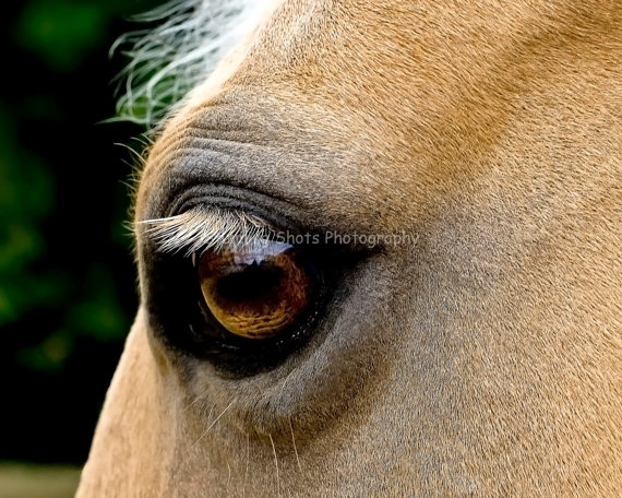 Eye Of Beauty, 8X12 Horse Photograph, Palomino Eye, Home Decore. $24.00, via Etsy.
