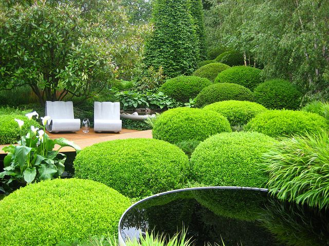 Best 650 pleached hedges topiary trees other decorative for Topiary garden designs
