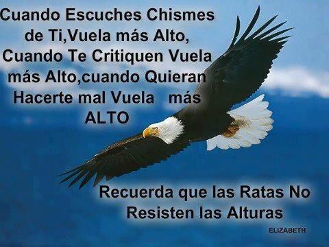 Aguila | Mensajes Positivos | Pinterest