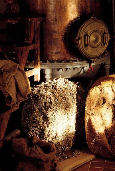 Distillation mousse de chêne - Distillation of oakmoss - Fragonard PARFUMEUR #Fragonard #Process #Oakmoss