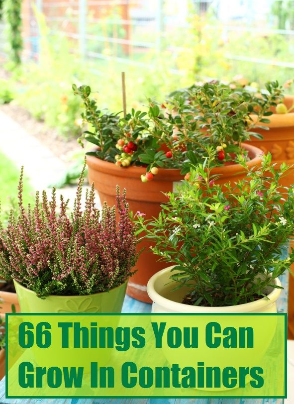66 Things You Can Grow in Containers: Tree Fruits, Citrus Fruits, Vegetables, Spices & More! This would be handyyy for Clear Creek!