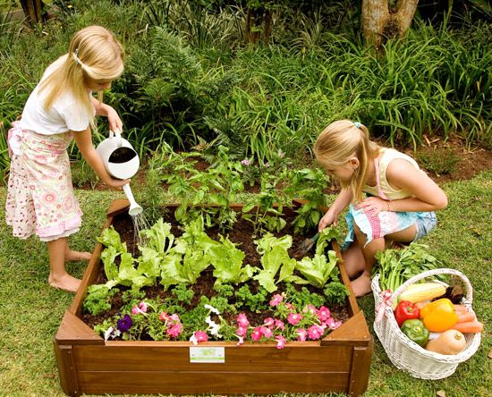 just for kids veggie garden box gardening going green gardens decor home design directory south africa - Vegetable Garden Ideas For Kids