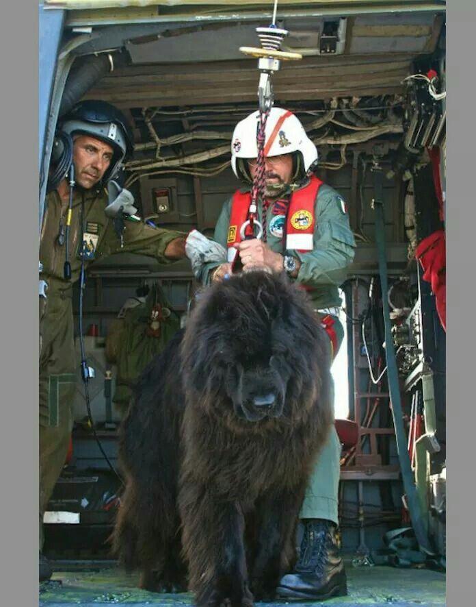Coast Guard Newfoundland K-9 Rescue