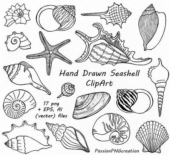 Hand Drawn Seashell Clipart, Shell clip art, Digital