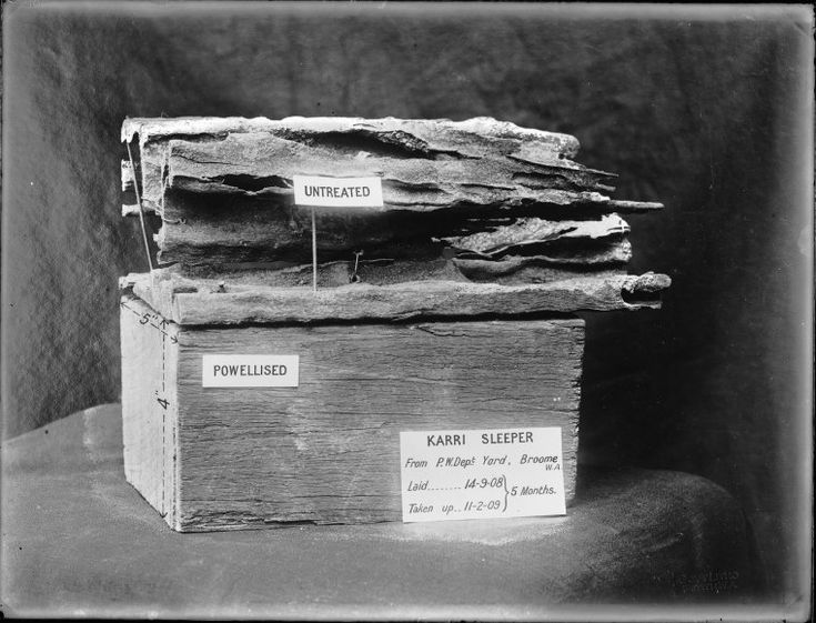 014247PD: Powellised and untreated karri sleeper after five months of being laid in Broome, 1909 http://encore.slwa.wa.gov.au/iii/encore/record/C__Rb2952695?lang=eng