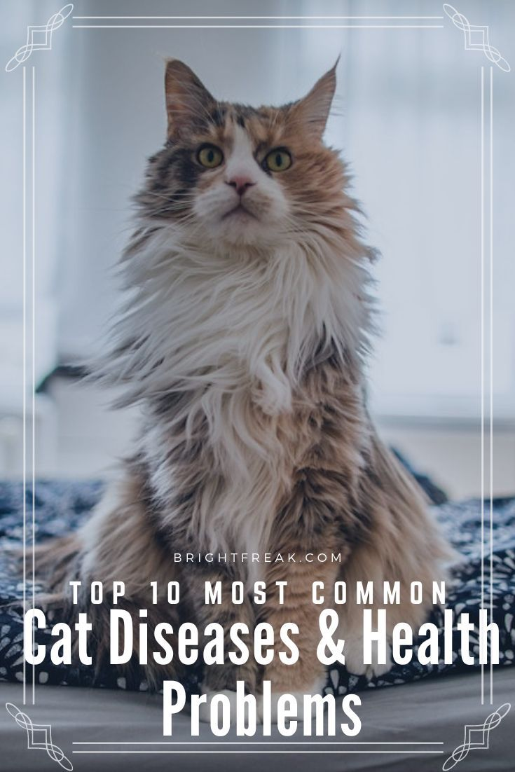 Top 10 Most Common Cat Diseases And Health Problems In 2020 Cat Diseases Cat Health Problems Cat Ailments
