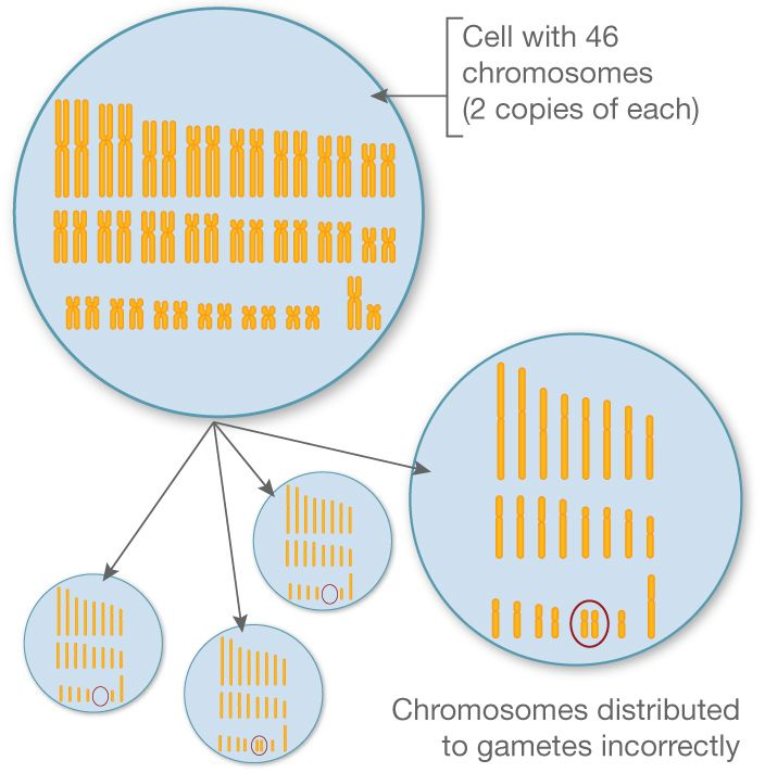 non dis junction Acute ethanol exposure induces nondisjunction of the x chromosome during  spermatogenesis lisa c lyons, ralph m hecht department of biology.