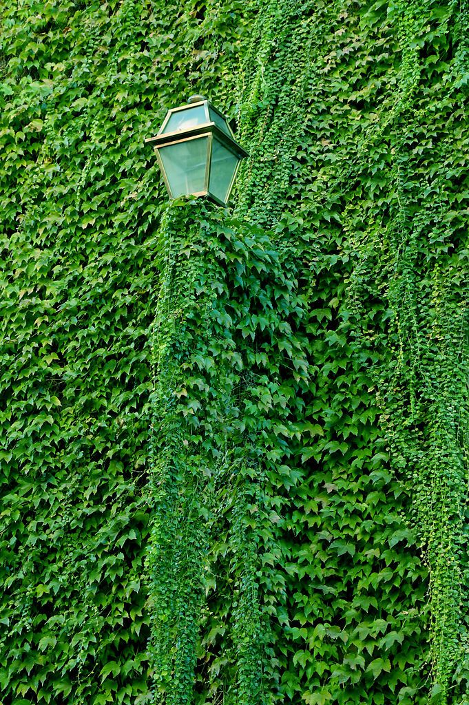 681px-Lamp_post_with_ivy_in_Trastevere.JPG (681×1024)