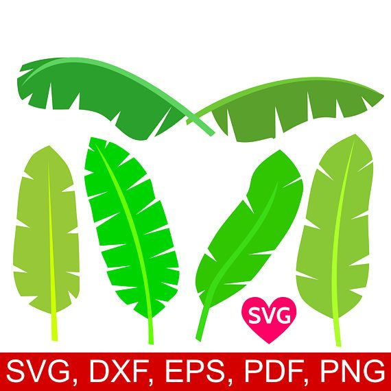 6 Tropical Banana Leaves Svg Bundle Printable Banana Leaf Svg File For Cricut Silhouette Tropical Svg Tropical Decor Tropical Leaf Svg Monstera Leaf Leaf Template Banana Leaf