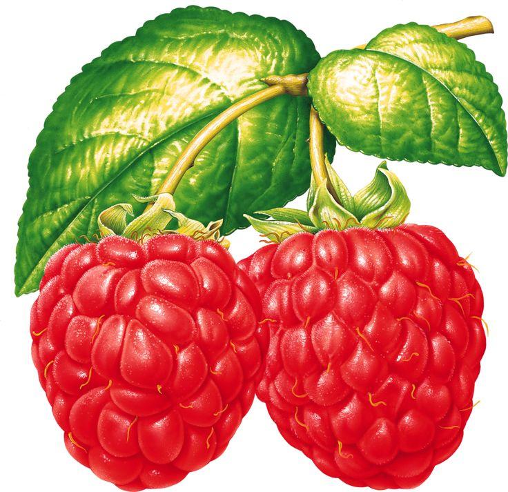 Поздравления днем, ягода в картинках для детей