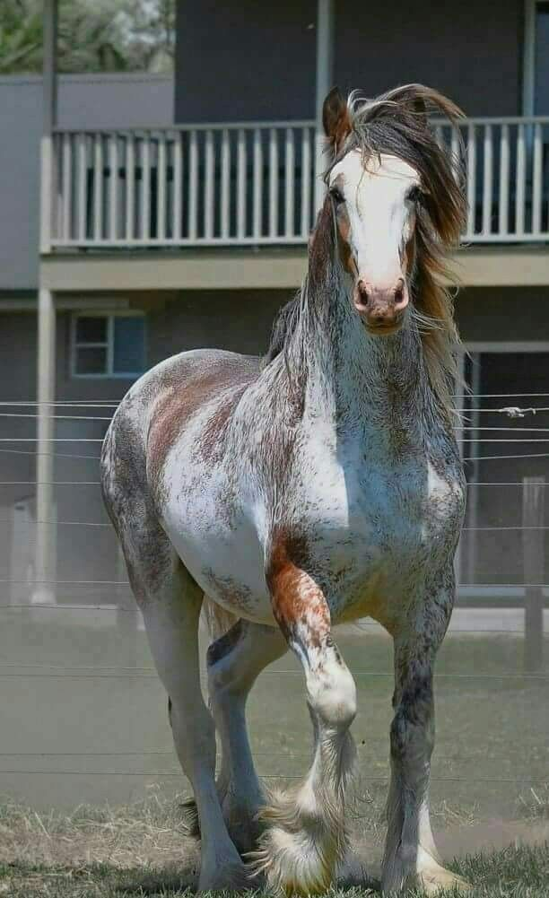 What a show off! Gorgeous colored horse with high spirits!
