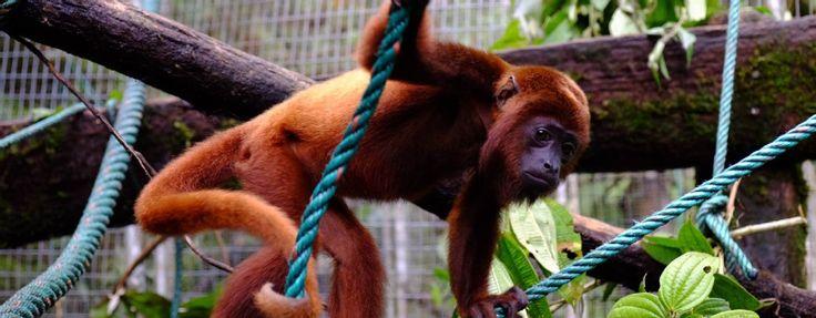 Merazonia Wildlife Rescue and Rehabilitation Center
