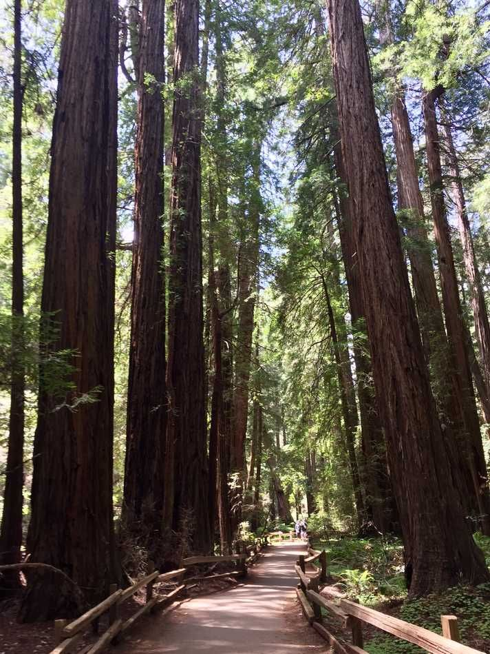 Redwood Creek Trail - 1.2 miles in Mill Valley, CA at Muir Woods ...