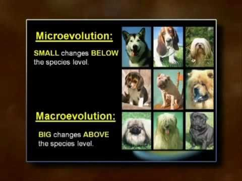EVOLUTION VS DEVOLUTION: Micro vs MacroEvolution