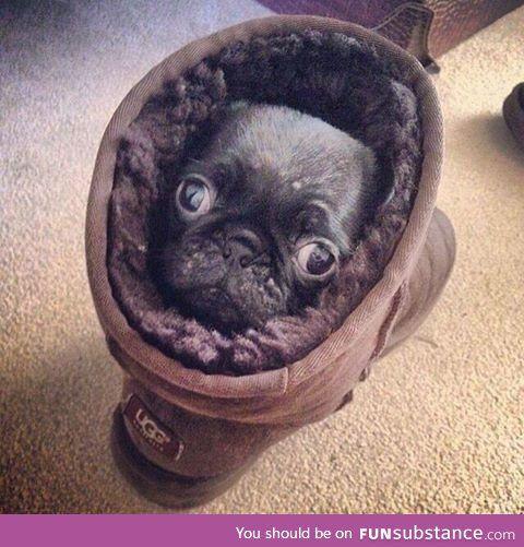 Pug in an Ugg on the rug looking snug