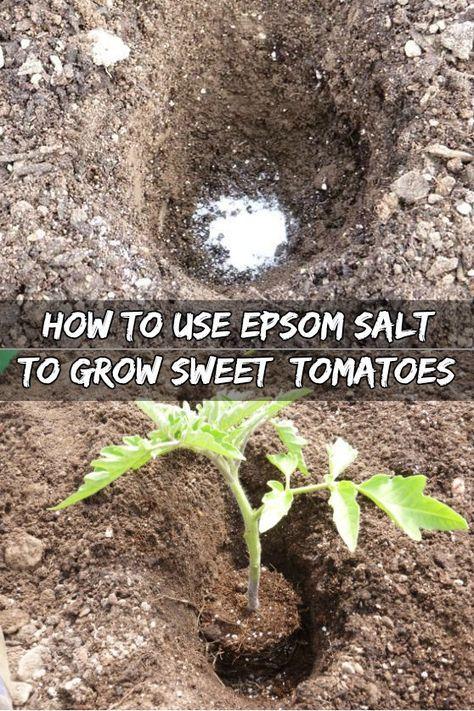 25 Best Ideas About Epsom Salt For Tomatoes On Pinterest