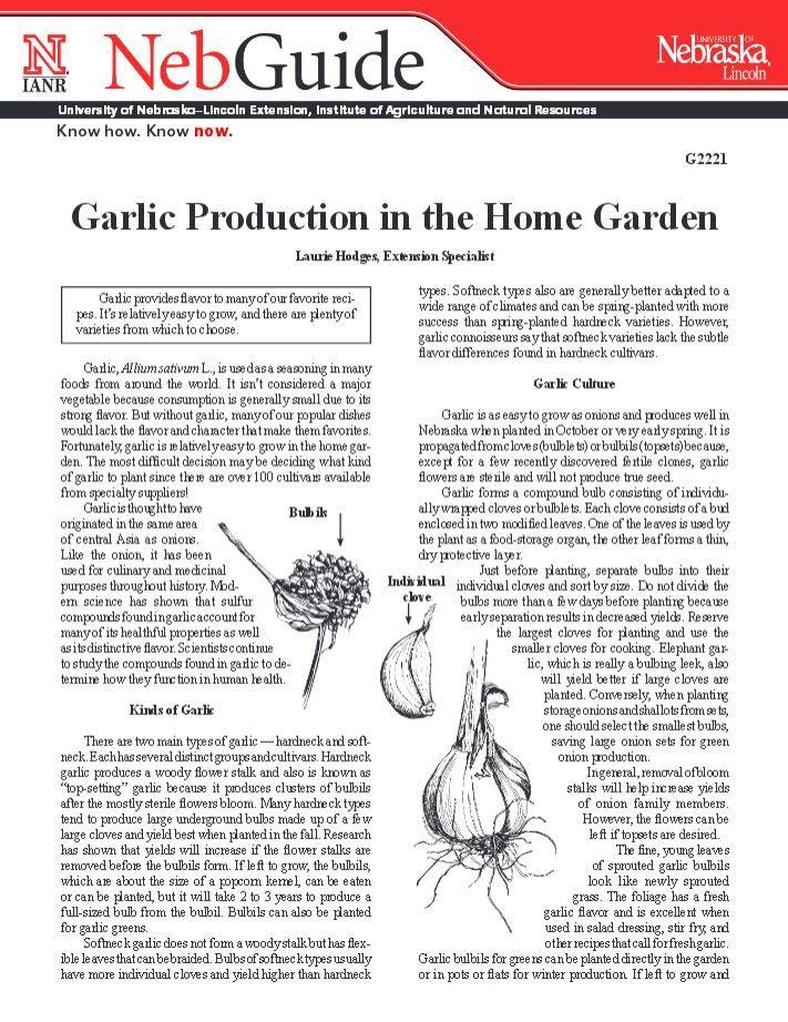 Garlic Production in the Home Garden #NebExt
