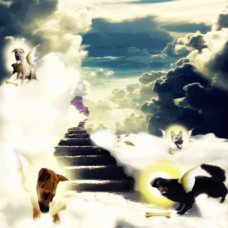 Dog Can Go Heaven