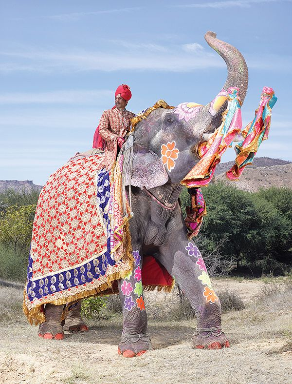 La parata degli elefanti dipinti