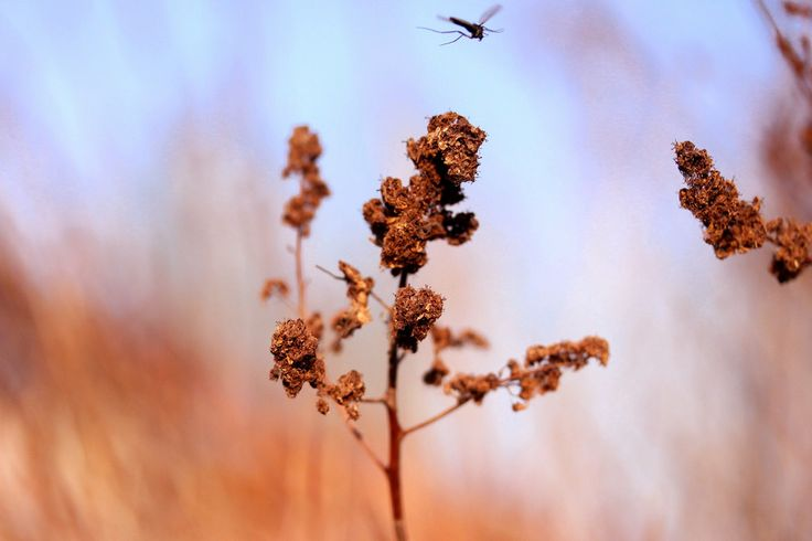 Mosquito summer is comig | by Siniirr