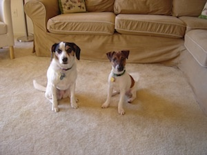 Daisy and Zeke--one of many size comparison photos as puppy Zeke grew up!