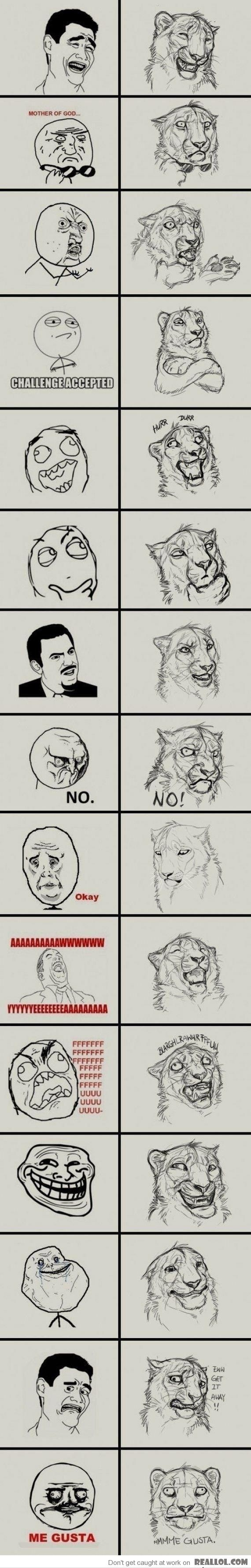 Tiger versions of Rage Comic faces! The last ones are the best ones. Haha