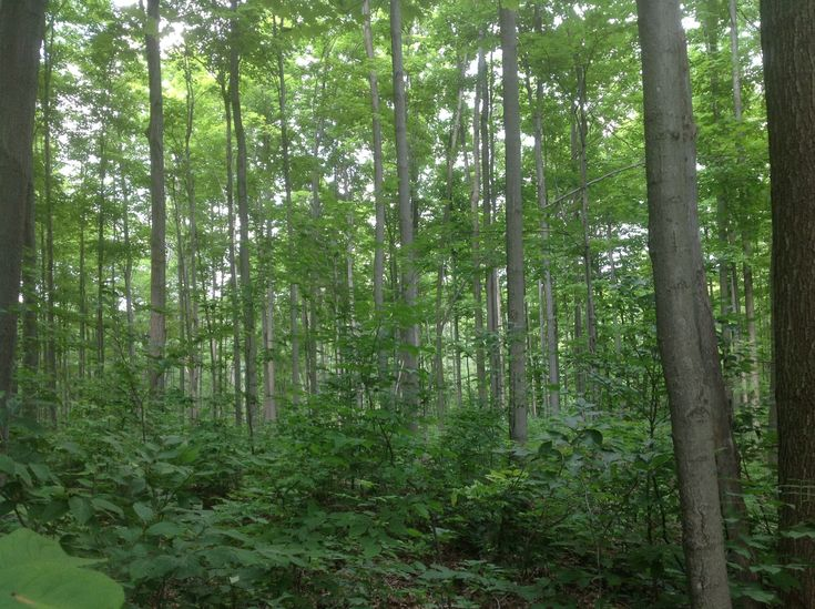 This is an example of SFM...Sustainable Forestry Management!