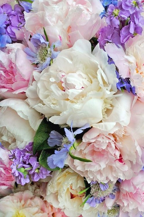 love the pink and lavender with white flowers