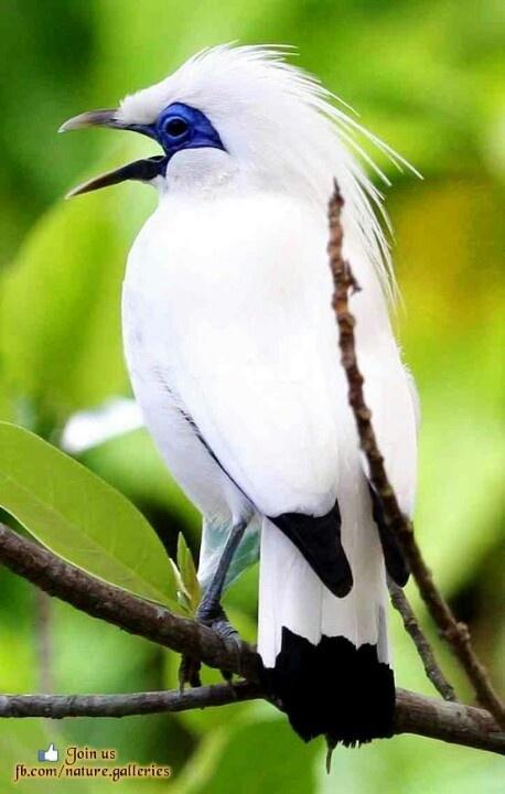 143 mejores imágenes de Anita Vasquez-Centeno en Birds en Pinterest ...