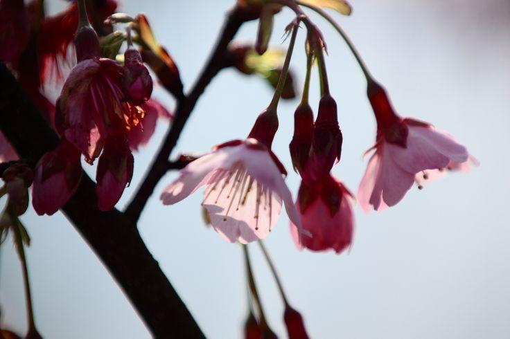 faire livrer des bouquets à domicile 026 #fleurs #bouquet
