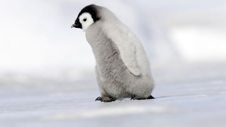 10 Times Penguins Beat Us At Life With Their Cuteness: It was recently World Penguin Day and to help celebrate here are 10 times penguins beat us at life... with their cuteness!