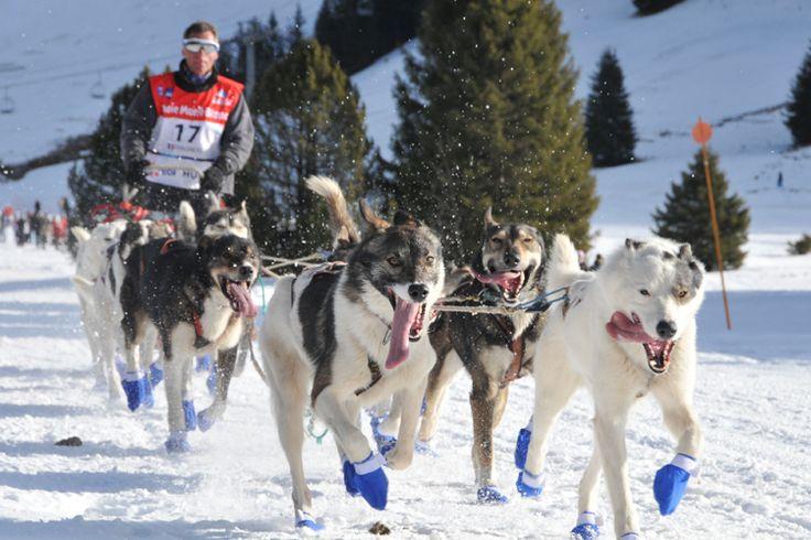 La Grande Odyssée Savoie Mont Blanc 2015 : François Pagnoux - Alaskan Team