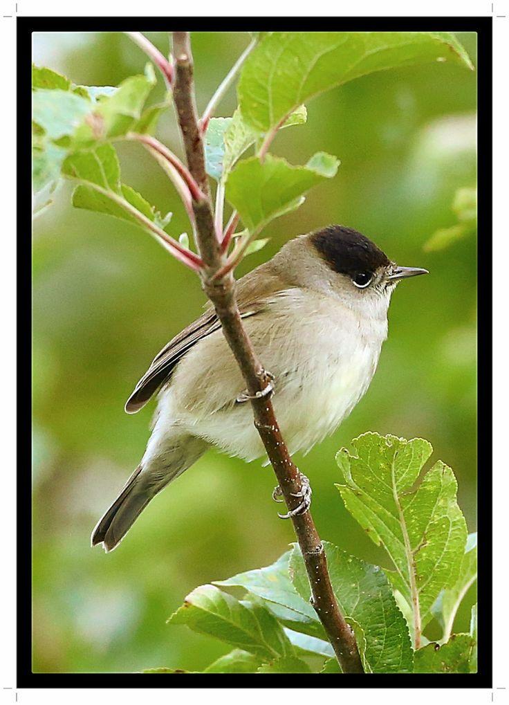 pin von kairanda auf birds in my garden in 2020