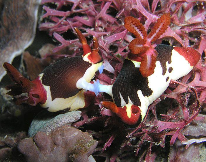 Cool Nudibranch