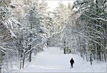 Snowshoeing in Wisconsin: A guide to the best trails and hikes