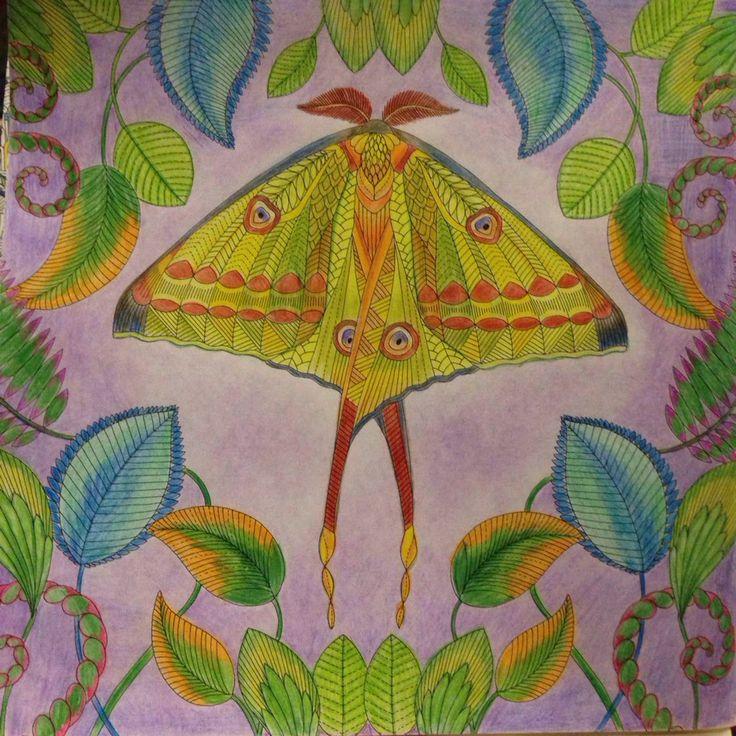 Tropical Wonderland AnimalsPrismacolorColoring BooksColouringWild