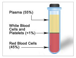 OUTCOME 2 - Blood Components | What is in Blood | American Red Cross