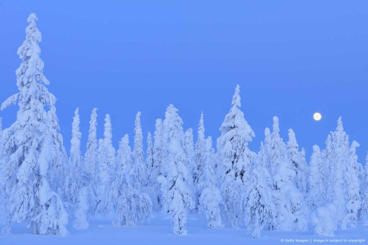 Finland, Suomi Pohjanmaa. Pohjanmaalla maisema näyttää hinolta  varsinkin talvella.Huomaatte että puihin keertyy paljon lunta. Kirjoittanut:Jami.