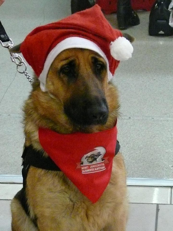 GSD Rescue Hungary