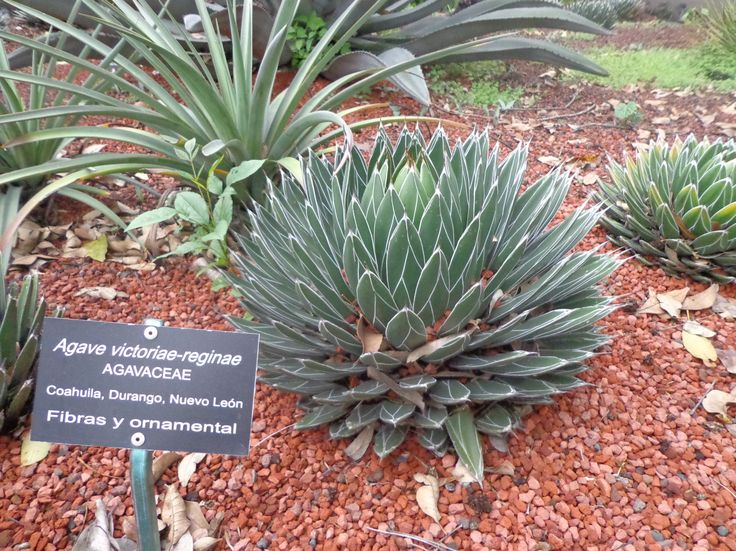 Jardín botánico del Instituto de Ecología de la Unam