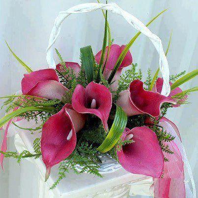 Mis Kokulu ÇiçeklerŞahane Gül,nisanboard,Çiçek Resimleri,papatyalar,güller,zambak,lale,sümbül,ren kli güller,kırmızı güller,pembe güller,sarı güller,beyaz güller,siyah güller,çüçek çeşitleri,nisanboard,orkide,renkli orkideler,kardelen,kır çiçekleri