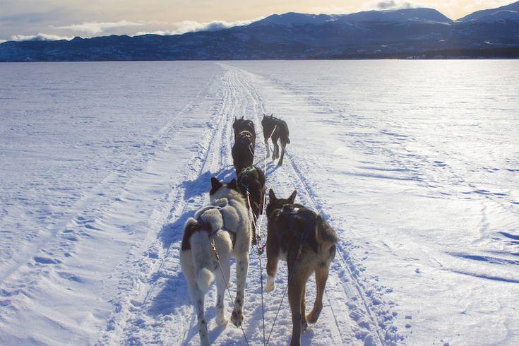 Canada-Yukon-Dog-Mushing-32