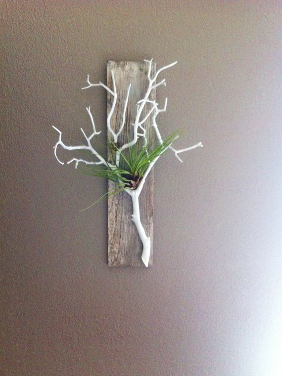Gray Stained Barn Wood, with Coral White Branch, Air Plant Holder and Wall Hanging - So beautiful